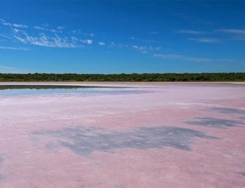 Dunaliella salina: fuente de protección solar