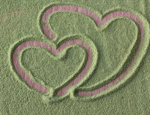 Chlorella, ¿el camino más corto a un corazón saludable?