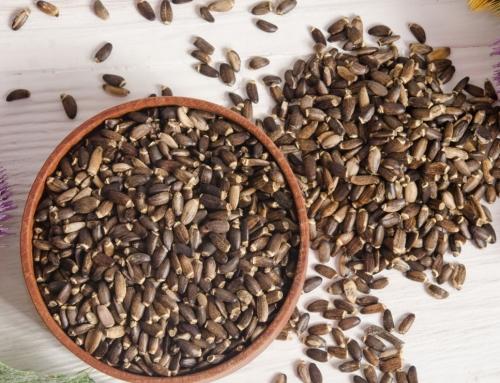 Cardo mariano: un contrastado antioxidante