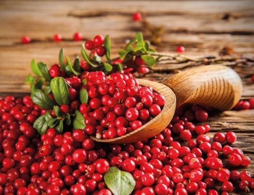 La suplementación diaria con arándano rojo reduce el riesgo de ITUs recurrentes